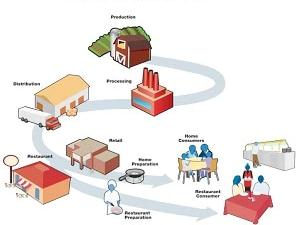 The Food Production Chain